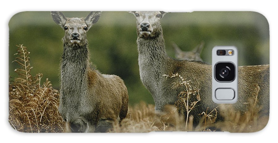 Deer Galaxy S8 Case featuring the photograph Doe And Young Deer by Steve Somerville