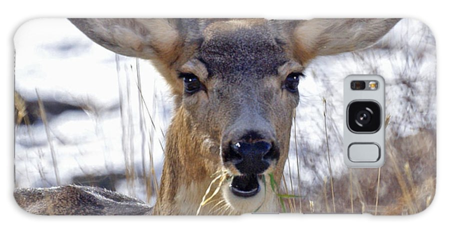 Doe Galaxy Case featuring the photograph Doe by Heather Coen
