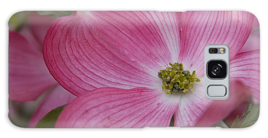 Dogwood Galaxy Case featuring the photograph Dogwood Bloom by Idaho Scenic Images Linda Lantzy