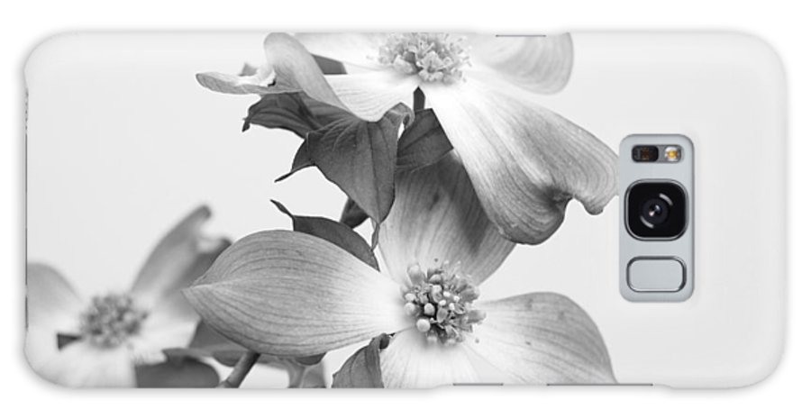 Dogwood Galaxy S8 Case featuring the photograph Dogwood Bloom by Todd Hostetter