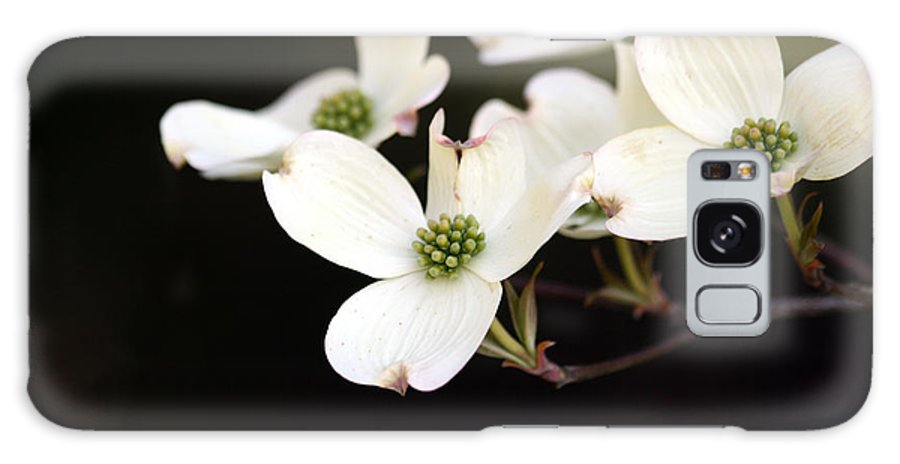 Dogwood Galaxy S8 Case featuring the photograph Dogwood Blooms by George Jones