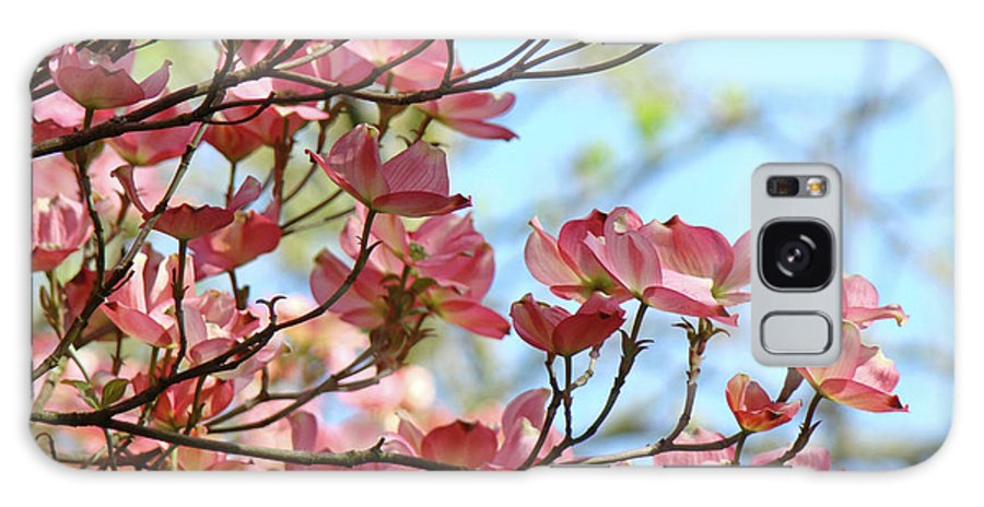 Dogwood Galaxy S8 Case featuring the photograph Dogwood Flowering Trees Pink Dogwood Flowers Baslee Troutman by Baslee Troutman