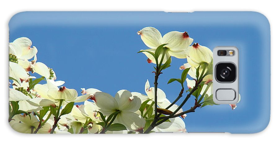 Dogwood Galaxy S8 Case featuring the photograph Dogwood Flowers Art Prints White Flowering Dogwood Tree Baslee Troutman by Baslee Troutman