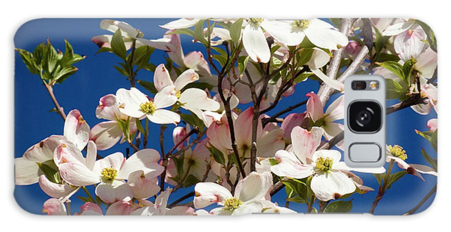 Dogwood Galaxy S8 Case featuring the photograph Dogwood Sky by Jim And Emily Bush