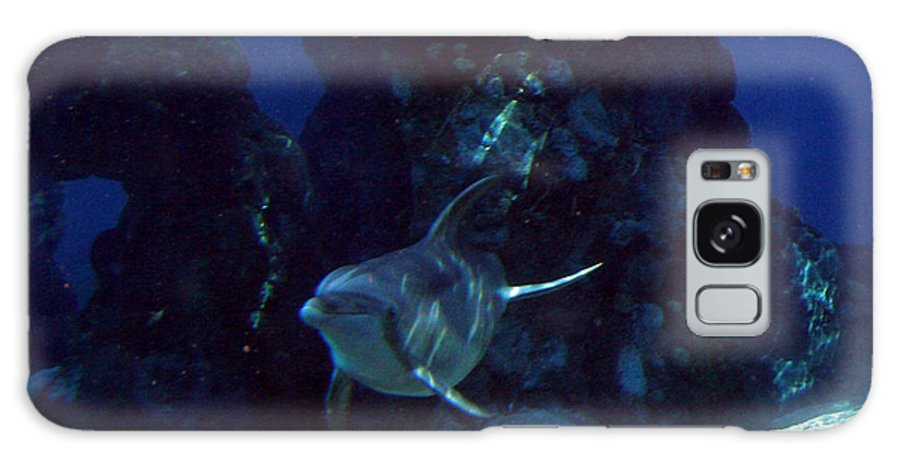 Dolphin Fish Aquatic Life Water Aquarium Sea Sandy Shore Rock Reef Galaxy S8 Case featuring the photograph Dolphin by Andrea Lawrence
