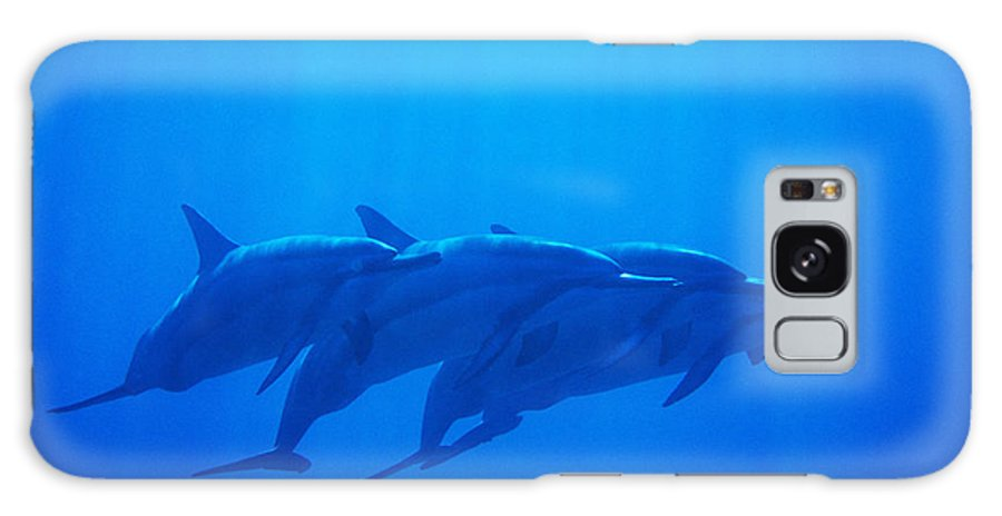 Animal Art Galaxy S8 Case featuring the photograph Dolphin Pod by Joss - Printscapes