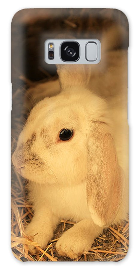 Rabbit Galaxy S8 Case featuring the photograph Domesticated Rabbit by Robert Hamm