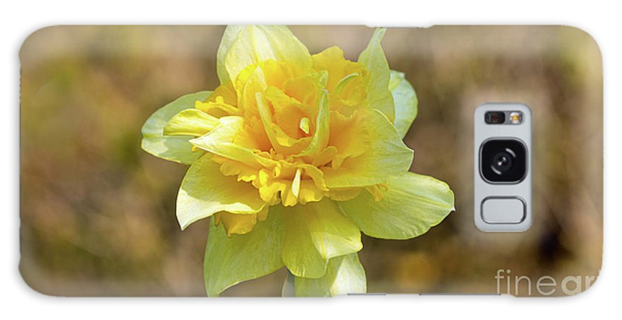 Nature Galaxy S8 Case featuring the photograph Double Headed Daffodil by Peter McHallam