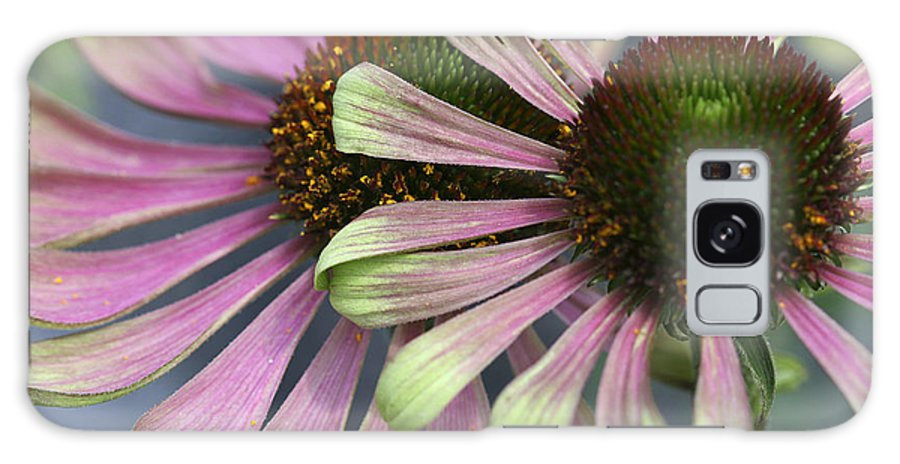 Flower Galaxy S8 Case featuring the photograph Double Vision Cone by Deborah Benoit