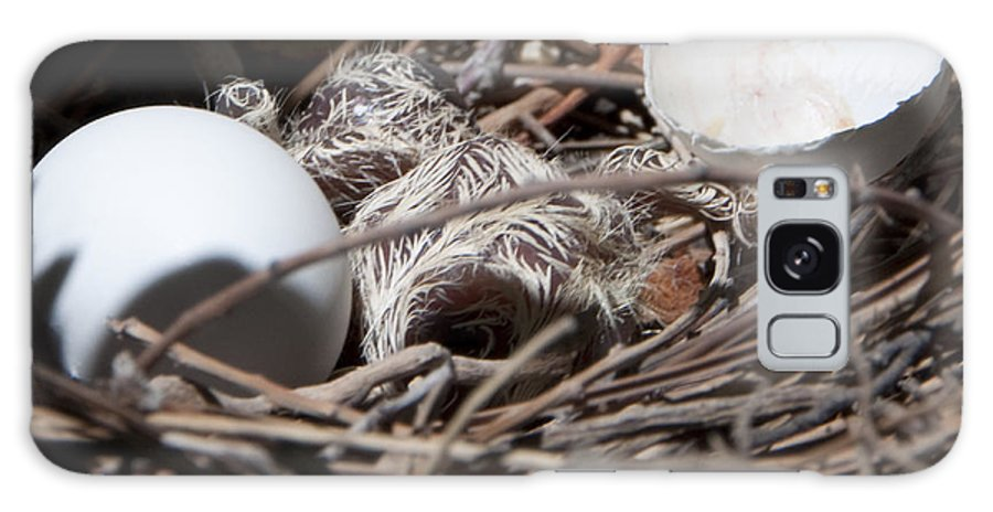 Nest Galaxy S8 Case featuring the photograph Dove Hatchling by Steven Natanson