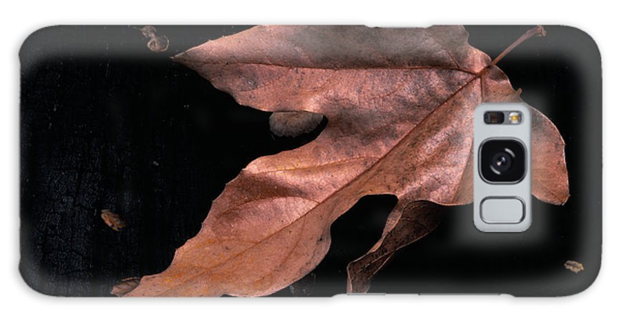 Sycamore Galaxy S8 Case featuring the photograph Downed Sycamore Leaf by Paul Breitkreuz