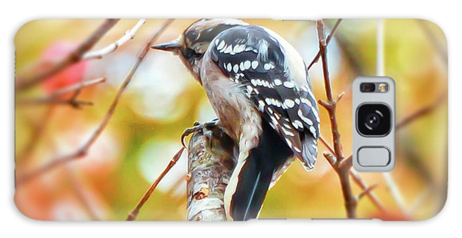Downy Woodpecker Galaxy S8 Case featuring the photograph Downy Woodpecker In Autumn Forest by Kerri Farley