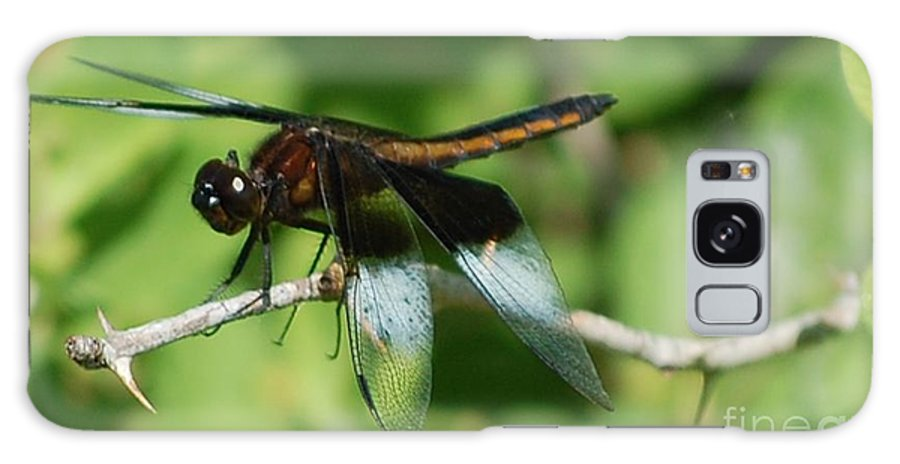 Digitall Photo Galaxy S8 Case featuring the photograph Dragon Fly by David Lane