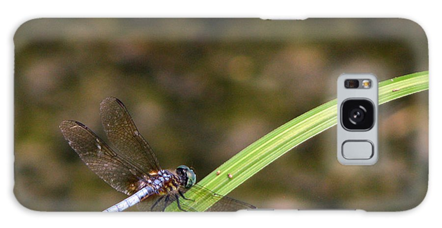Dragonfly Galaxy Case featuring the photograph Dragonfly by Amanda Barcon
