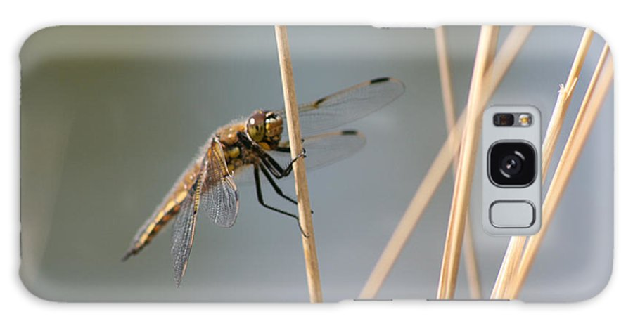 Bugs Dragonfly Flying Insect Reeds Grass Gold Color Eyes Wings Wild Nature Galaxy S8 Case featuring the photograph Dragonfly by Andrea Lawrence
