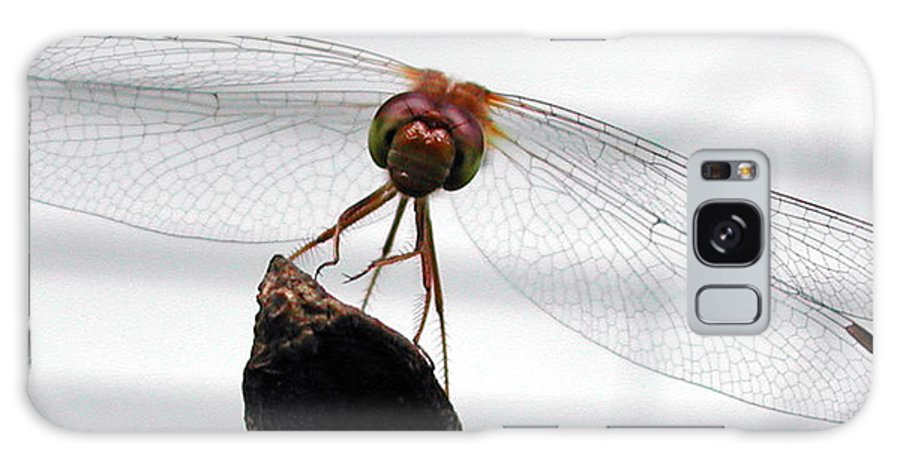 Nature Galaxy S8 Case featuring the photograph Dragonfly Face by Steven Scanlon