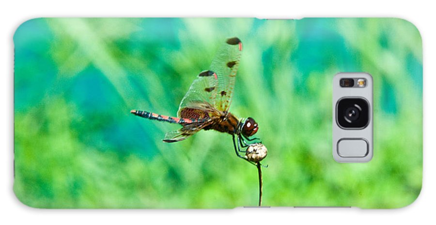 Dragonfly Galaxy Case featuring the photograph Dragonfly Hanging On by Douglas Barnett