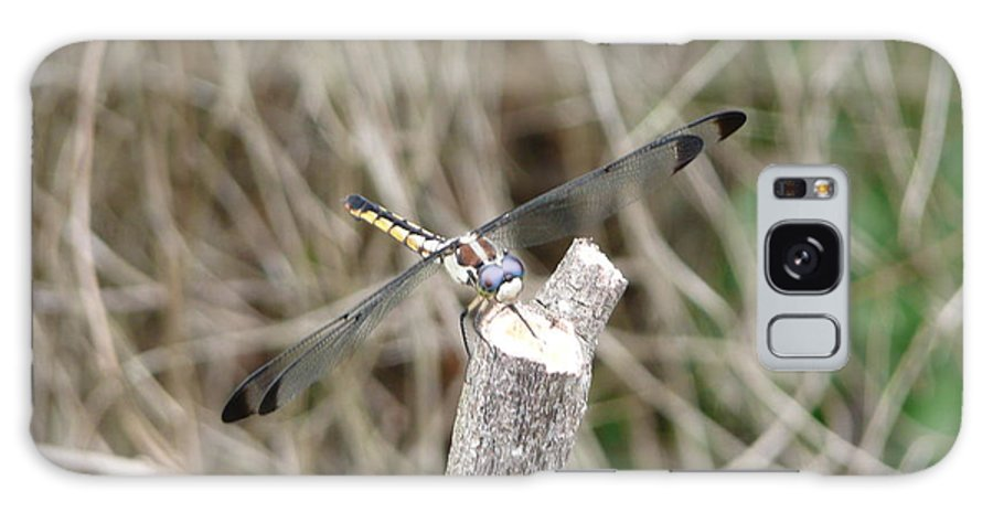 Wildlife Galaxy Case featuring the photograph Dragonfly I by Kathy Schumann
