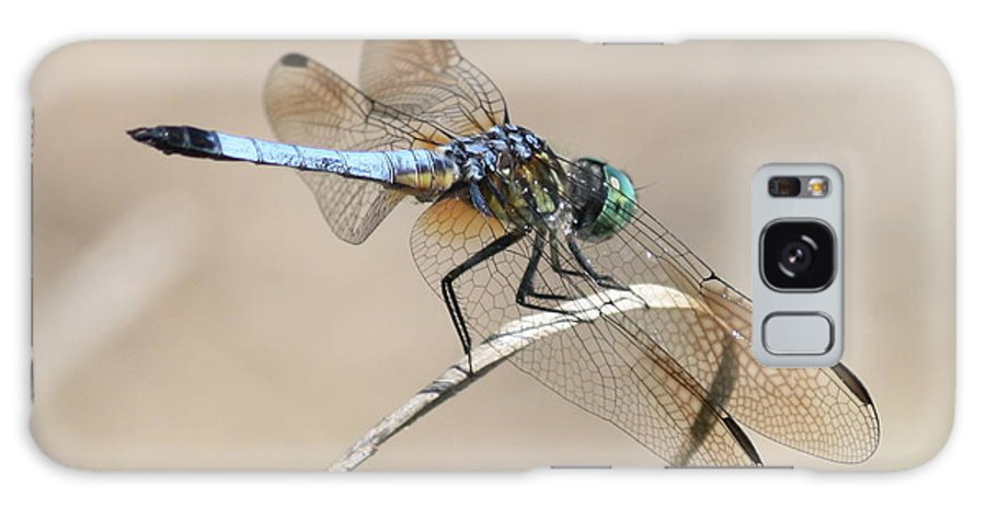 Dragonfly Galaxy S8 Case featuring the photograph Dragonfly On Bent Reed by Carol Groenen