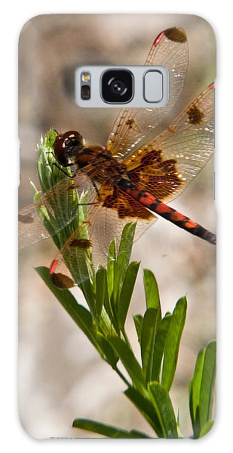 Dragonfly Galaxy Case featuring the photograph Dragonfly Resting by Douglas Barnett