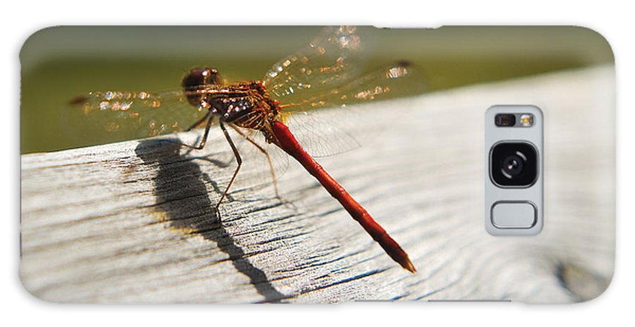 Dragonfly Galaxy S8 Case featuring the photograph Dragonfly by Steve Somerville