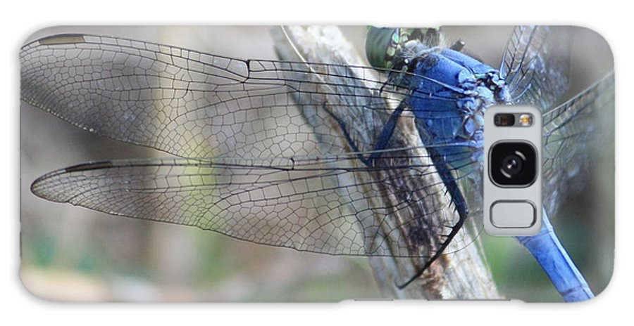 Dragonfly Galaxy S8 Case featuring the photograph Dragonfly Wing Detail by Carol Groenen