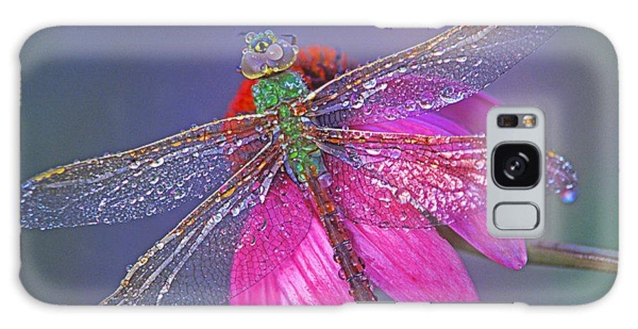 Dew Covered Dragonfly Rests On Purple Cone Flower Galaxy S8 Case featuring the photograph Dreaming Dragon by Bill Morgenstern
