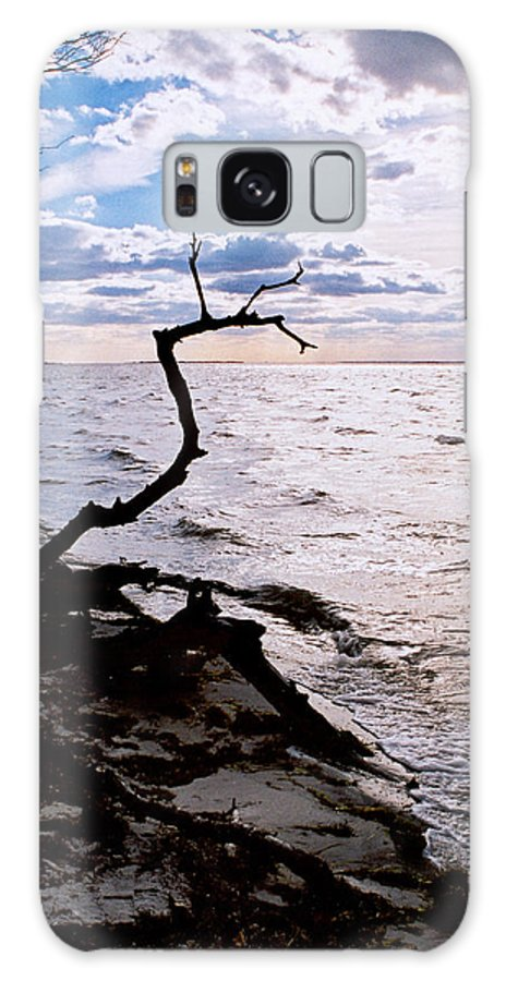 Barnegat Galaxy S8 Case featuring the photograph Driftwood Dragon-barnegat Bay by Steve Karol