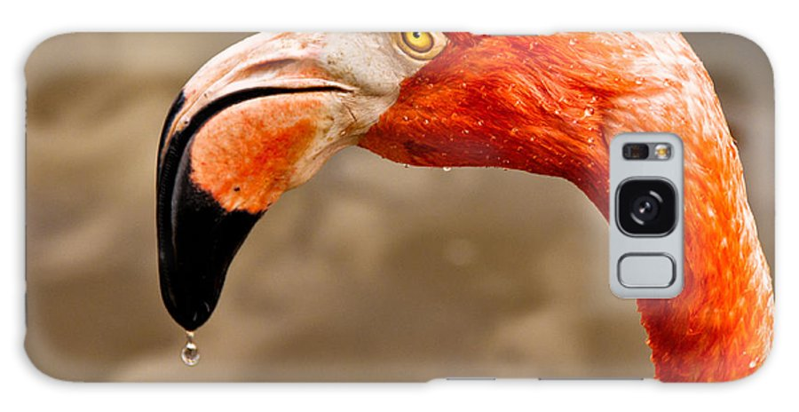Flamingo Galaxy S8 Case featuring the photograph Dripping Flamingo by Christopher Holmes