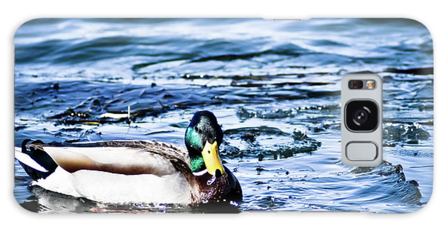 Duck Galaxy S8 Case featuring the photograph Duck by Brenton Woodruff