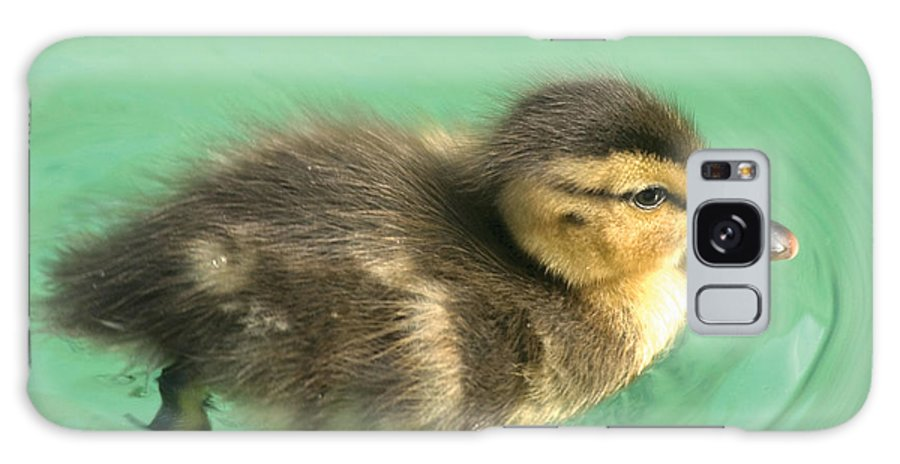 Duckling Galaxy Case featuring the photograph Duckling Close Up by Steve Somerville