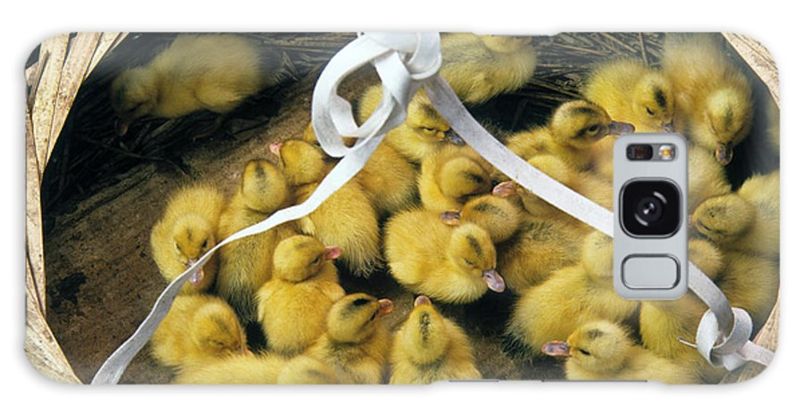 China Galaxy S8 Case featuring the photograph Ducklings In A Basket by Michele Burgess
