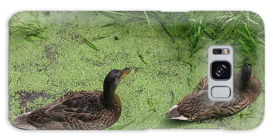 Duck Galaxy S8 Case featuring the photograph Ducks In Pond by Melissa Parks