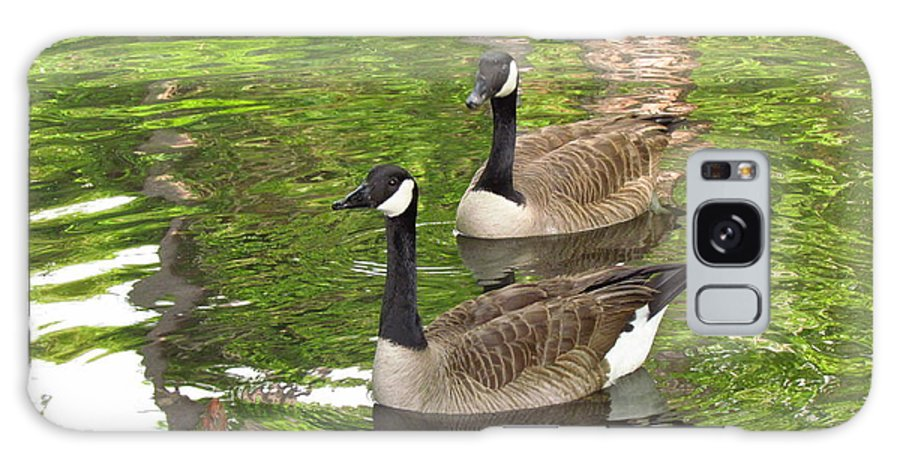 Ducks Galaxy S8 Case featuring the photograph Ducks Out For A Swim by Meshella Ungaro