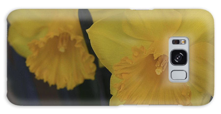 Daffodils Galaxy S8 Case featuring the photograph Duo In Daffodils by Deborah Benoit