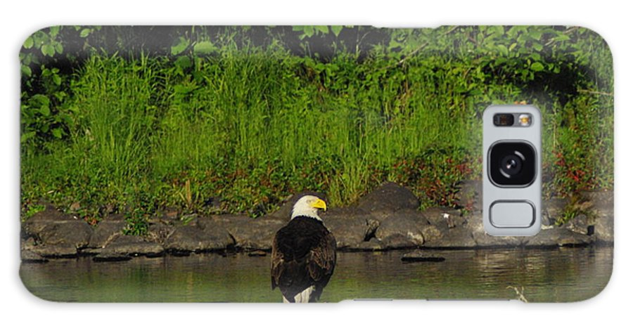 Eagle Galaxy S8 Case featuring the photograph Eagle On River Rock II by Alice Markham