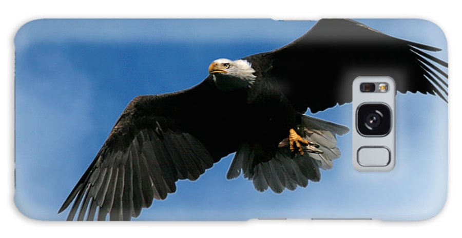 Bald Eagle Galaxy S8 Case featuring the photograph Eagle Pride by Randall Ingalls