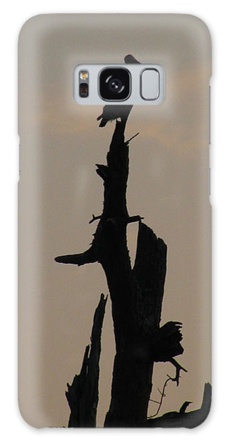 Dead Tree Galaxy S8 Case featuring the photograph Early Morning Silhouette by Donna Brown