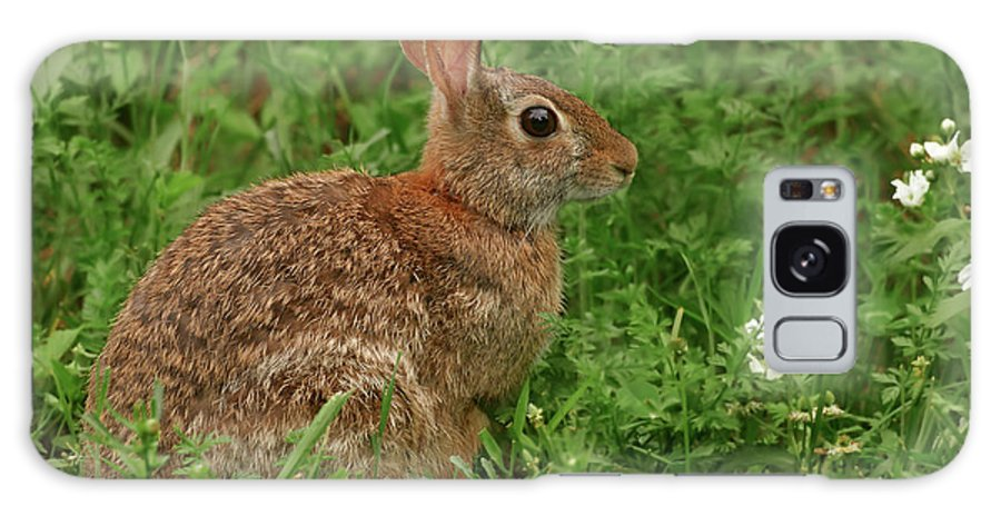 Easter Bunny Galaxy S8 Case featuring the photograph Easter Bunny by Grant Groberg
