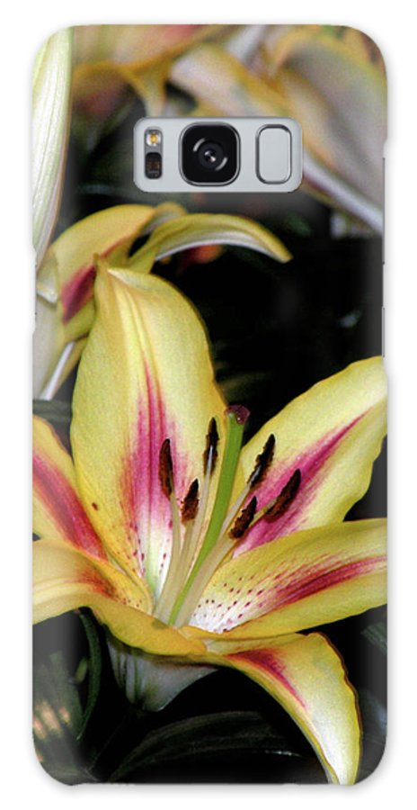 Flower Galaxy S8 Case featuring the photograph Easter Lilies by Trish Tritz