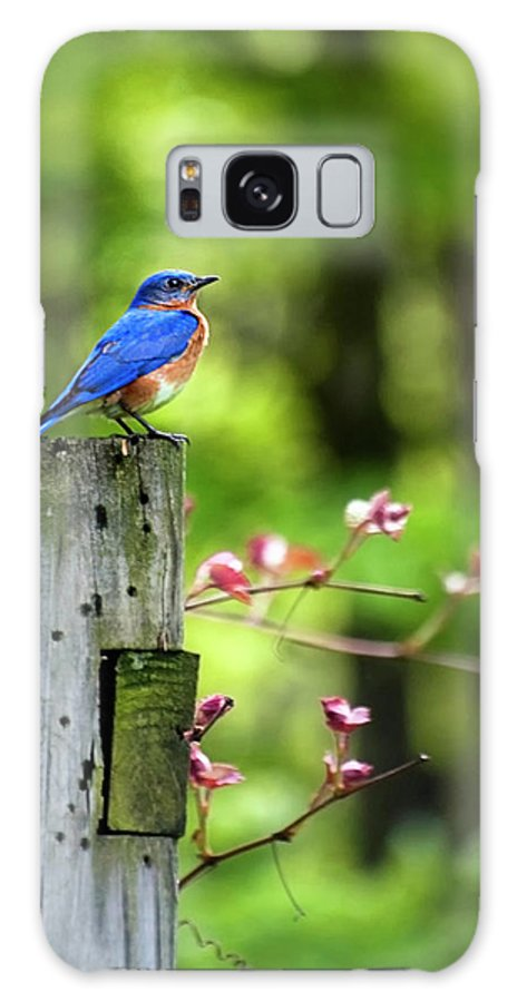 Bluebird Galaxy S8 Case featuring the photograph Eastern Bluebird by Christina Rollo