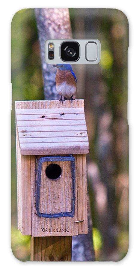 Cumberand Galaxy S8 Case featuring the photograph Eastern Bluebird Perched On Birdhouse 4 by Douglas Barnett
