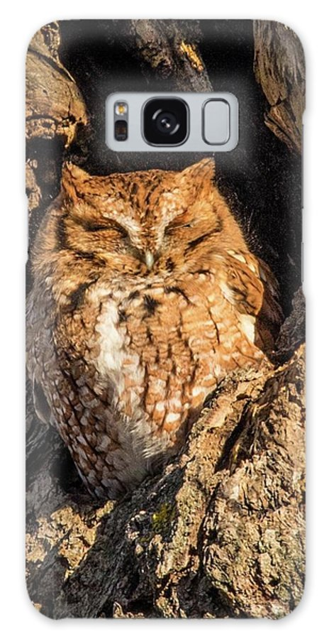 Owls Galaxy S8 Case featuring the photograph Eastern Screech Owl by Nancy Wilkinson