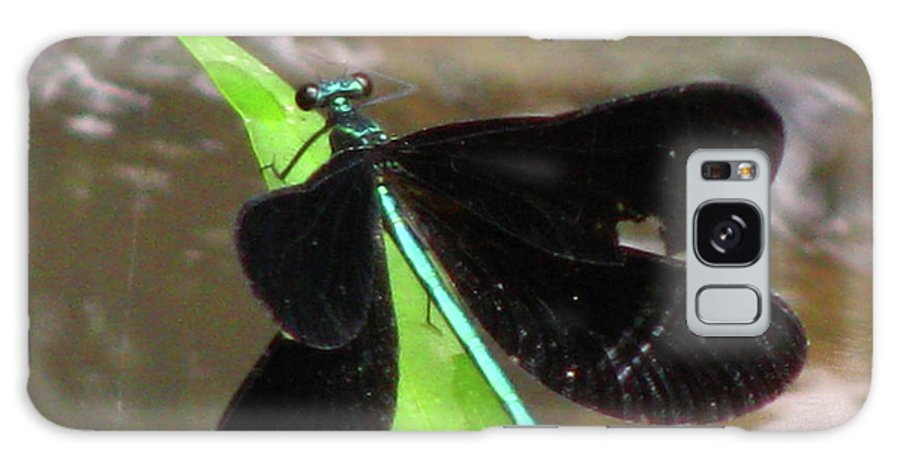 Insect Galaxy S8 Case featuring the photograph Ebony Jewel Damselfly by Donna Brown