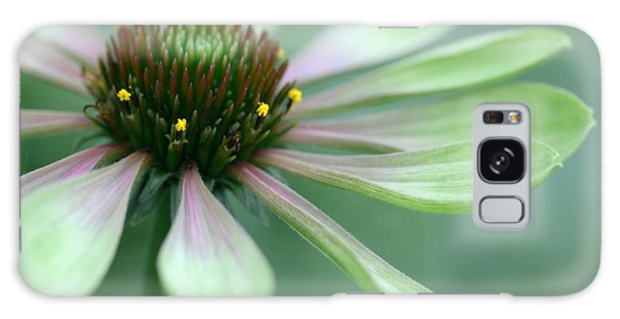 Betsy Lamere Galaxy S8 Case featuring the photograph Echinacea - Green Envy by Betsy LaMere