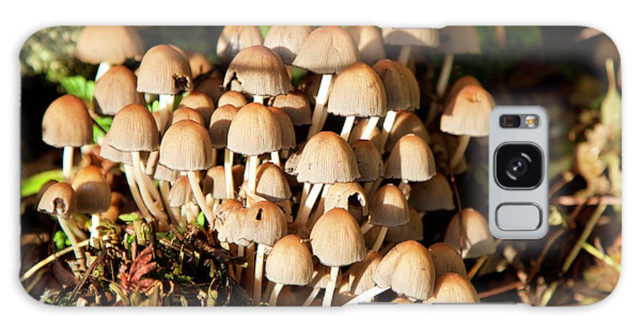 Coprinellies Micaceus Galaxy S8 Case featuring the photograph Edible Fungi At Sunrise by Ros Drinkwater