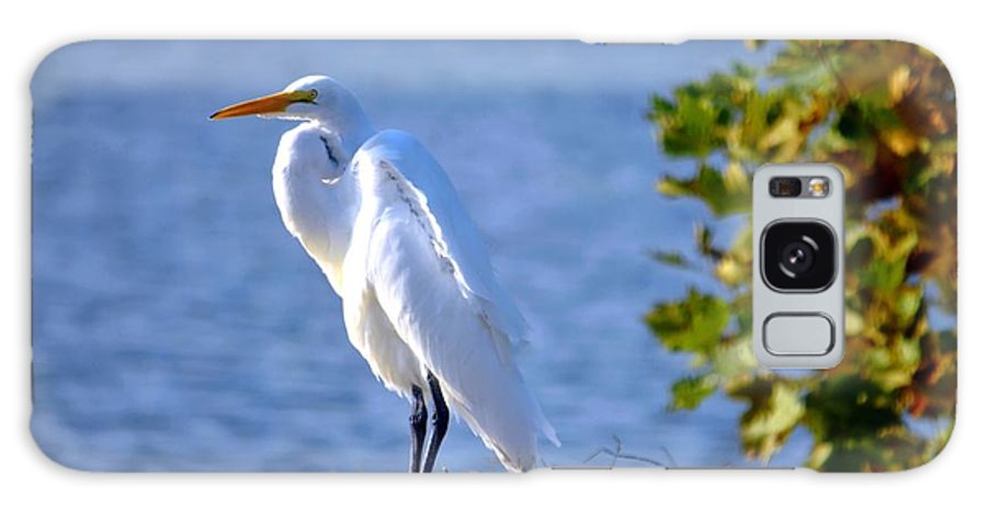 Spring Lake Galaxy S8 Case featuring the photograph Egret by Bob Cuthbert