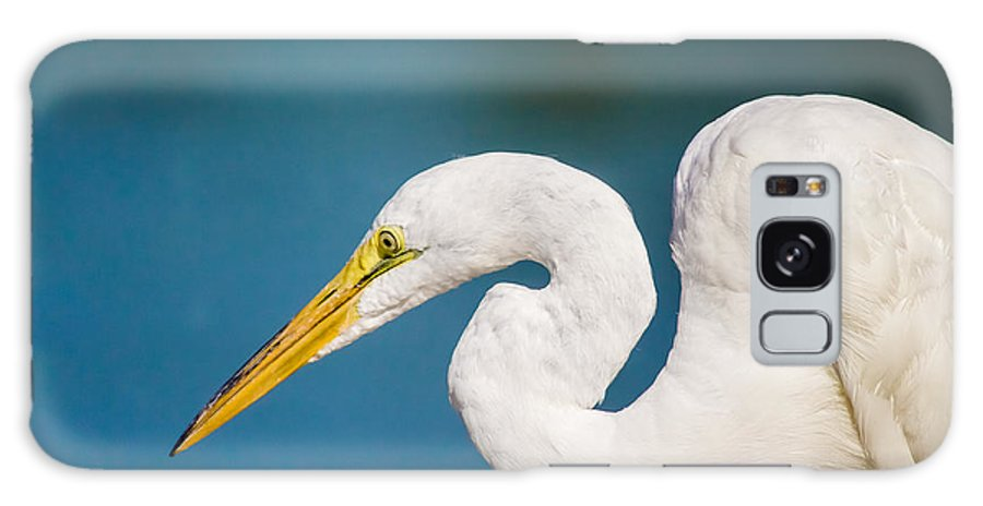 Animal Galaxy S8 Case featuring the photograph Egret On Blue by Robert Frederick