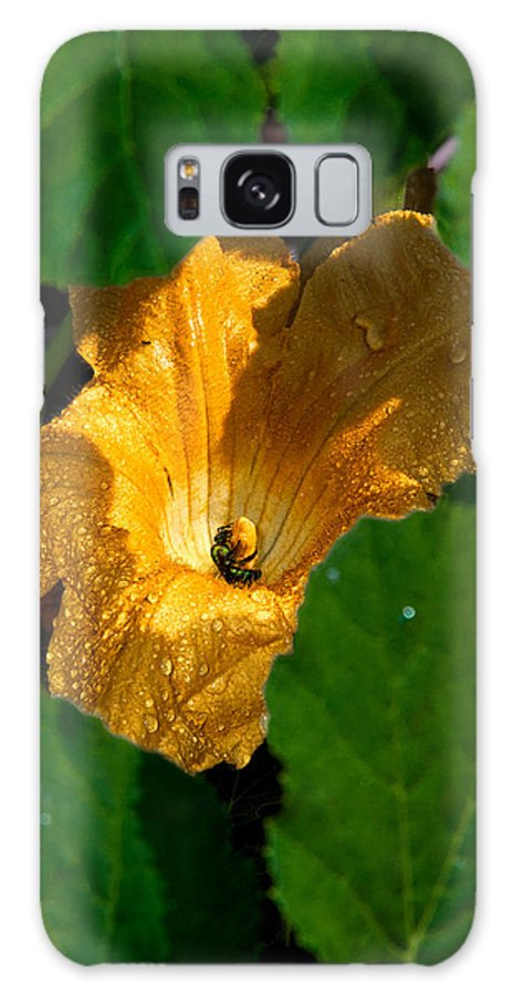 Squash Galaxy S8 Case featuring the photograph Eldorado For Bees by Christopher Holmes