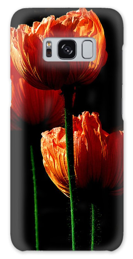 Photograph Galaxy S8 Case featuring the photograph Elegance by Stephie Butler